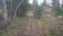 Turen fortsätter genom skog...