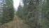 Skogen har kommit tätt inpå banvallen. Fortsätt gärna följa min resan ner mot Karungi genom att titta på bilderna i nästa bildspel.