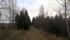 Skogen...