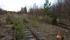 Här på bangården i Karungi lär spåret mot Övertorneå tidigare ha anslutit till de övriga spåren på den spårrika bangården.