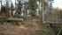 Trakten är drabbad av många vindfällda träd, även om  man har kapat av flera av dem för att göra leden framkomlig.