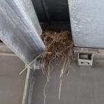 Under en av broarna fanns ett fågelbo.
