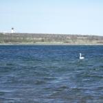 ...vid de sydligare delarna av Gotland...