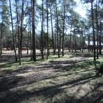 Russfarmen med Gotlandsruss vid Lojsta hed.