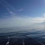 Det var lugnt ute på havet.