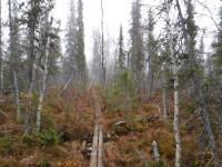 En spång i skogen.