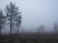 En dimmig dag.