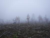 Många lövträd har tappat sina blad för i år.