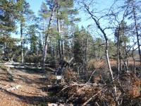 Många nedfallna träd, som antagligen föll våren 2016 då det blåste mycket.
