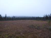Blöta myrmarker och skogen möts.