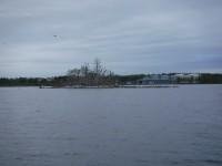 Fåglar bland de kala träden och oljehamnen i bakgrunden.