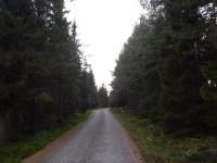 Längs en väg på Holmön.