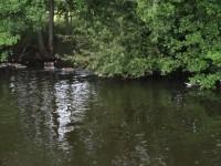 Några fåglar i kanalen.