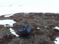 Bland snön så hittades även denna bara fläck.