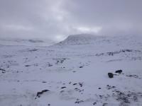 Snö i Lapplandsfjällen.