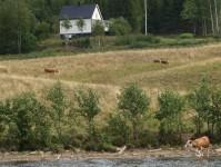 Mellan Töcksfors och Östervallskog är det lantliga vyer, då man befinner sig långt ute på landet.