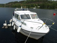 Svanar invid min båt i Bengtsfors.