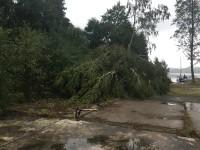 Träd som har fallit i hamnen i Fröskog.