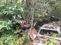 Några träd som tycks ha fått som levnadsöde att växa genom ett gammalt motorutrymme i en skrotbil på Bilkyrkogården i Båstnäs.