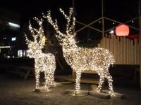 Lysande renar i Tromsø.