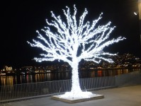 Ett fint träd i Tromsø.