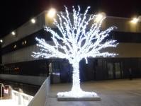 Träd i Tromsø.