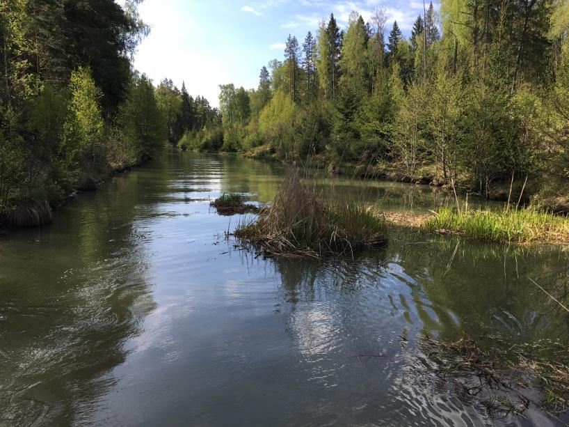 Stora tuvor flöt i Hjälmare kanal.
