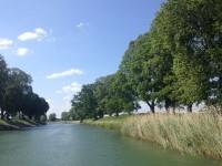 Längs stora delar av Göta kanal finns det fina trädalléer, vars rotsystem hjälper till att hålla ihop knalkanten.