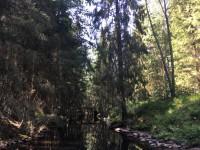 Prästbäcken går genom skogen.