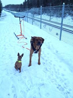Lilla Rosso och Winston