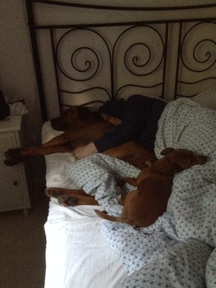 Winston, matte o Rosso olovligen i sängen;)