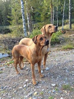 Zana  4 år vänster och Leo 8 år höger