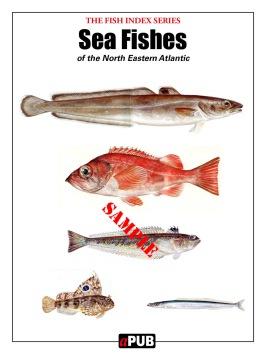 Sea fishes north eastern Atlantic