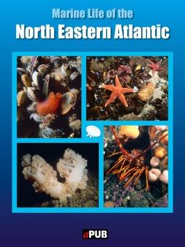 Marine life of the north eastern Atlantic
