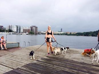 Nadia med hundar vid Liljeholmskajen