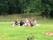 Sommar picknick