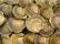 Snäckskalskross
