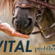 VITAL Probihorse