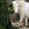 Foderstatsberäkning - Foderstatsberäkning 1 häst