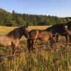 Foderstatsberäkning - Foderstatsberäkning 10 hästar