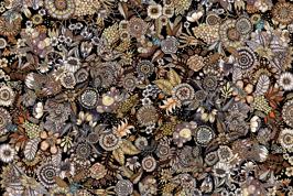 Flores - Flores brun