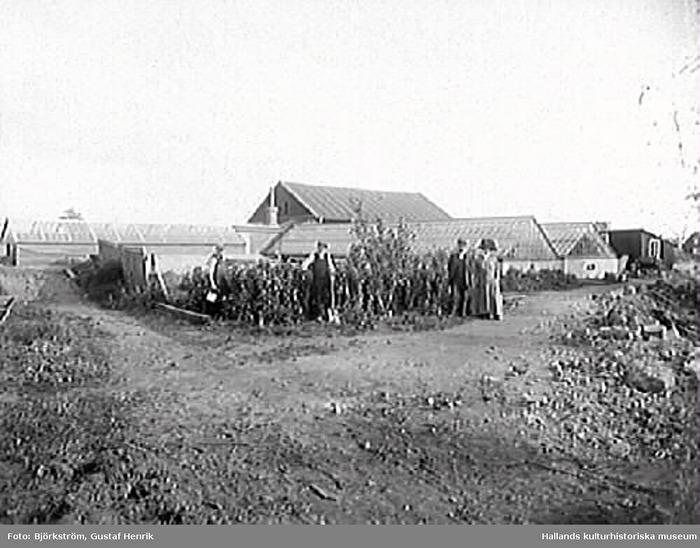 Trädgårdsarbete i Förstbergs handelsträdgård. Foto: Gustaf Henrik Björkström