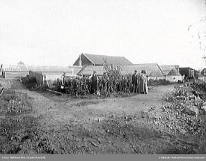 Hallands kulturhistoriska museum. Foto: Gustaf Henrik Björkström. Trädgårdsarbete i Förstbergs handelsträdgård.