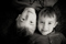 Felix & Adrian - 01