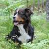 Molly i skogen