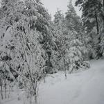 Vinter i Kisa