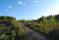 Solbelyst skogsväg Foto: Morgan Karlsson