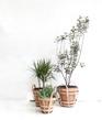 Strap Planter