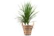 Strap Planter - Mellan