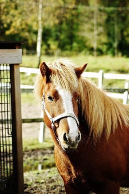Hera från Lundby, född år 2000.  Foto av Johanna Landgren